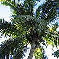Fiji_040